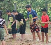 KKVS to do paddy farming 2019